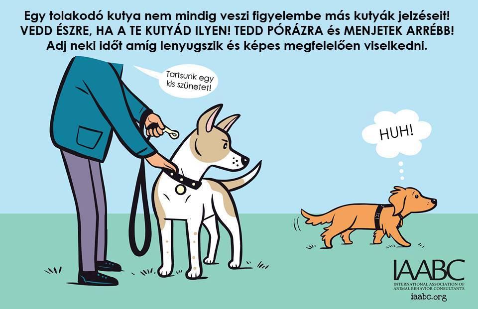 kutyas4.jpg
