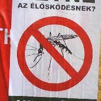 Ki a Jobbik szavazó?