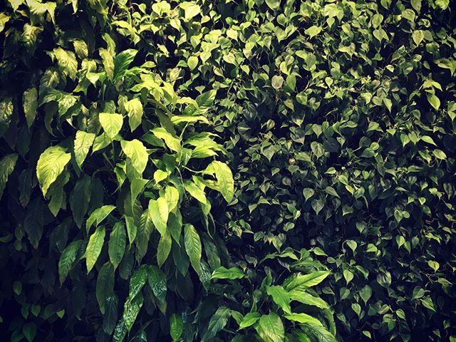 #greenwall #eiffelpalace #greenandcarelifestyle #uzletireggeli