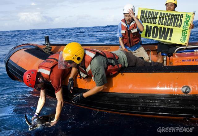 greenpeace-activists-free-an-e.jpg
