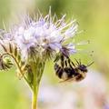 El tudod képzelni a világot méhek nélkül?