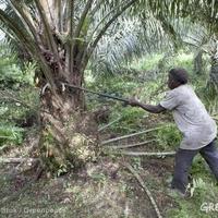 A biodiverzitás kulcsa a tudás, nem pedig a technológia