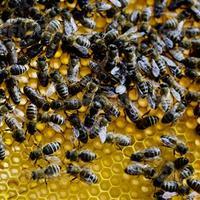 Veszélyben az európai mezőgazdaság: ideje, hogy betiltsuk a méhpusztító növényvédő szereket