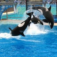 A röpülő delfin