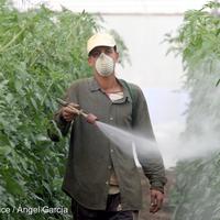 A vegyipari lobbi ezúttal legyőzte a tudományt és az európai lakosok akaratát – de nyertesként végül a környezetvédelemnek és az emberek egészségének kell felülkerekednie