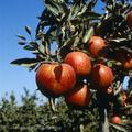 Betiltanák a növényvédő szereket, de nem lehet?