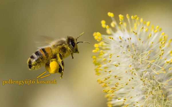 600_Honey-Bee-Flowers-Widescreen.jpg