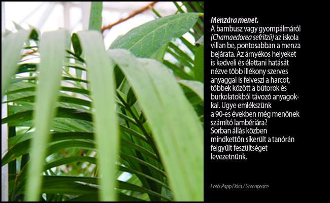 bambusz4.jpg