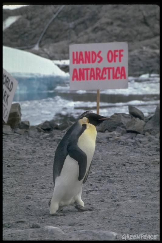 emperor-penguin-walking-past-g.jpg