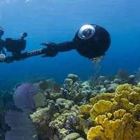 A Karib-térség korallzátonyainak 80%-a halott