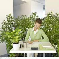 Zöldebb környezet: növeli a kreativitást az irodában, csökkenti a bűnözést a városban