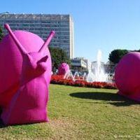 Óriás pink csigák lepik el Miamit - az újrahasznosítás jegyében