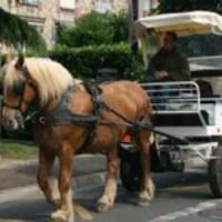 Az új francia trend: kukásautók helyett lovaskocsik