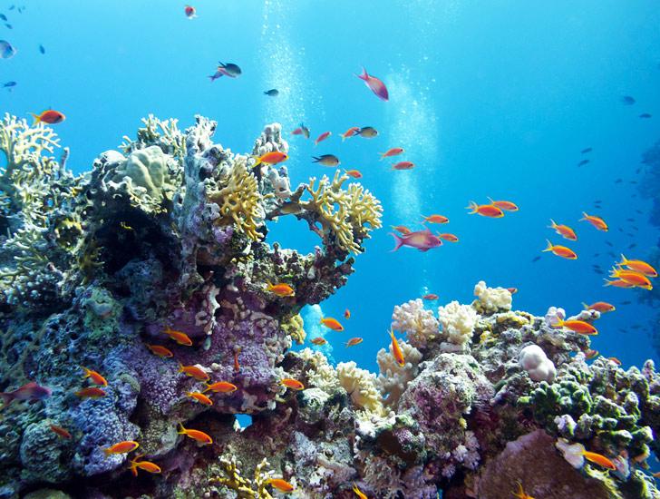 Caribbean-Coral-Reef.jpg
