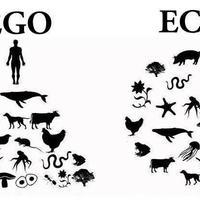 Napigondolat: EGO - ECO