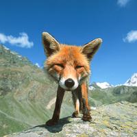 Stefano Unterthiner fotográfiái : Állatok szemtől szembe