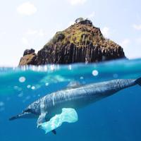 Napikép: Lefotózták az első bevásárolni induló delfint
