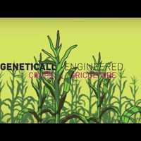 Videó: A géntechnológia a legnagyobb átverés