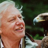David Attenborough ökológiai katasztrófára figyelmeztet