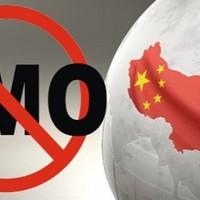 Kína 1 millió tonna génkezelt kukoricát küldött vissza az USA-nak