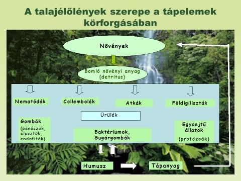 talajélőlányek greenr.jpg