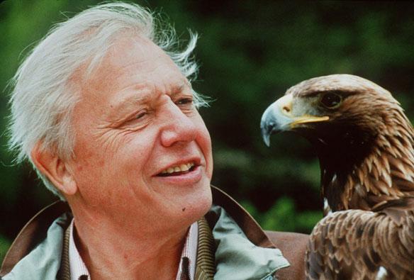 David Attenborough ökológiai katasztrófára figyelmeztet ...