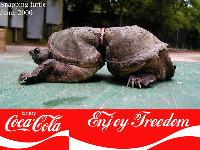 https://m.blog.hu/gr/greenr/image/cola-turtle.jpg