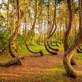 A világ legszebb erdői