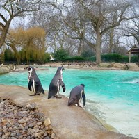 Anglia legszebb helyei: ZSL Whipsnade Zoo