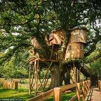 Treetops Treehouse - Lenyűgöző fára épített villa Angliában
