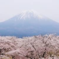 A világ legszebb cseresznyefa-virágzásai
