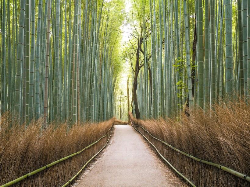 arashiyama-bamboo-grove-gettyimages-915795558.jpg