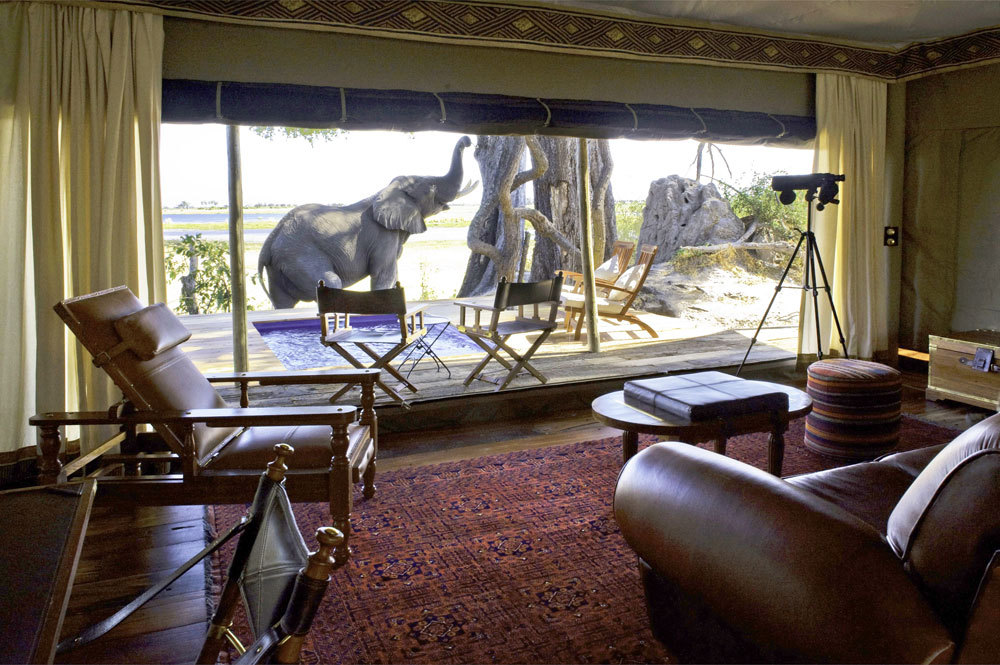 botswana-africa-indoor-view-elephant-zarafa-camp-wildlife-cheetah_lg.jpg