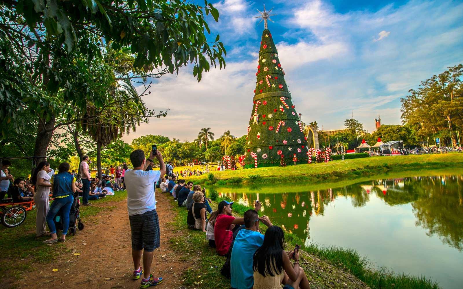ibirapuera-park-christmas-tree-brazil-christmastrees1217.jpg