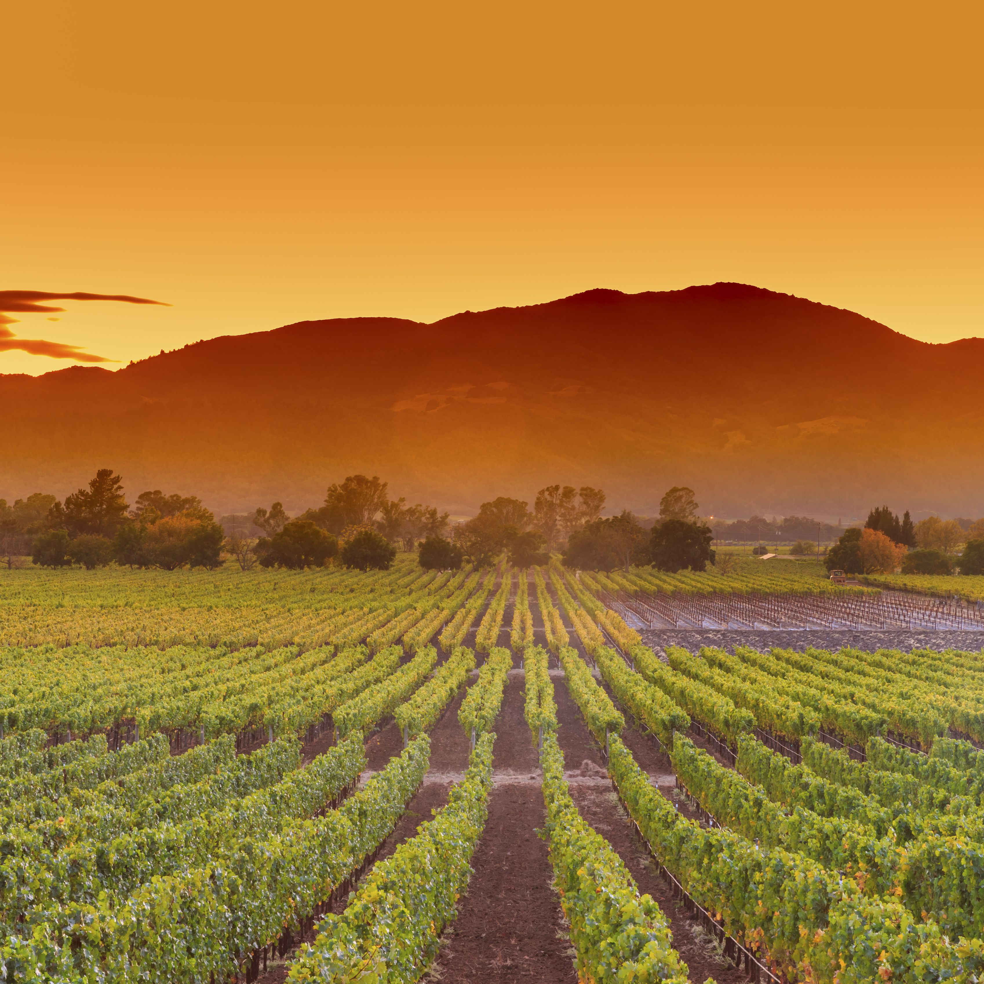 napa-valley-california-wine-country-vineyard-field-harvest-for-winery-494416494-28b52eb2c8ca415a93be31caa5bba097.jpg