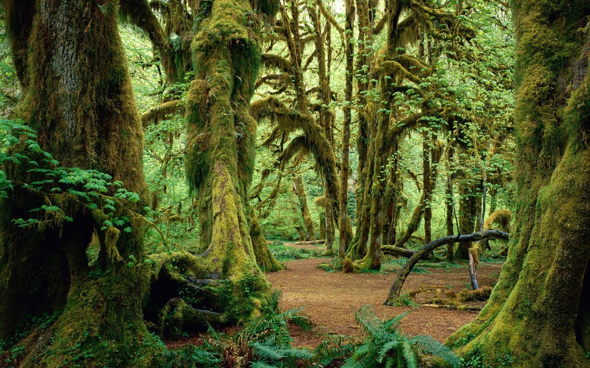 olympic_national_park-0_1.jpg