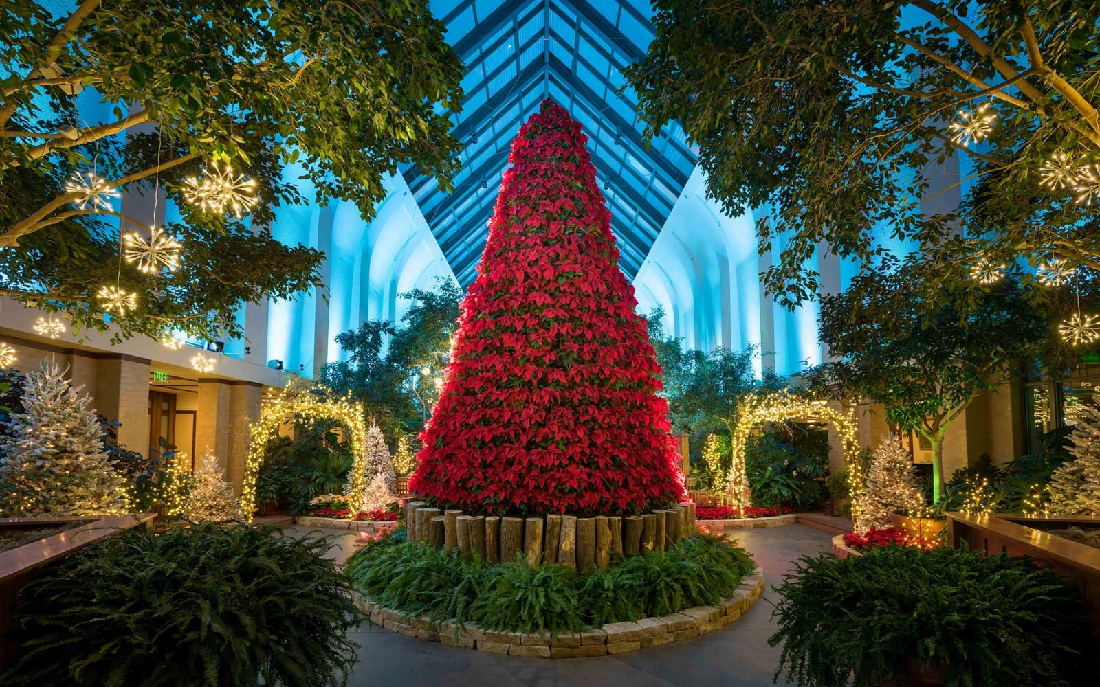poinsettia-christmas-tree-omaha-tree1216.jpg