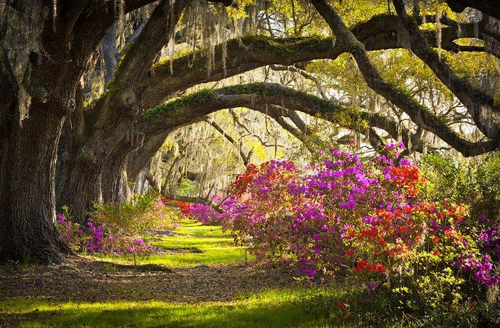 south-carolina-magnolia-plantation-in-charleston.jpg