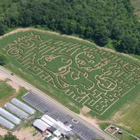 Family Guy: Corn Maze
