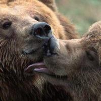Engedélyezték a védett állatok kilövését