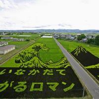 Elképesztő rizsföld képek Japánból