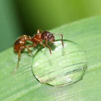 Ilyet még nem látott: esőcseppet kortyoló rovarok - képek és videó