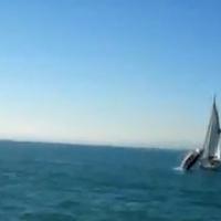 Bálna tört ketté egy vitorlást (videó)