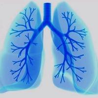 Tüdő alakú, nagy hatékonyságú üzemanyagcellák
