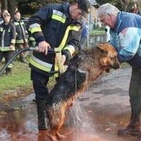 Kolontár, Devecser állatainak mentése