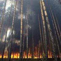 Nem kegyelmeznek az oroszországi erdőtüzek