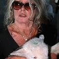 Brigitte Bardot a vágóhidakat támadja