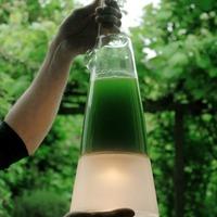 Latro: zöld algától világító lámpa