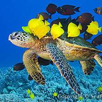 Halálba küldik a teknősöket?