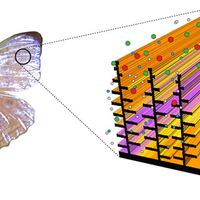 Lepkeszárnyak ihlették az új nanoszenzor tervezőit
